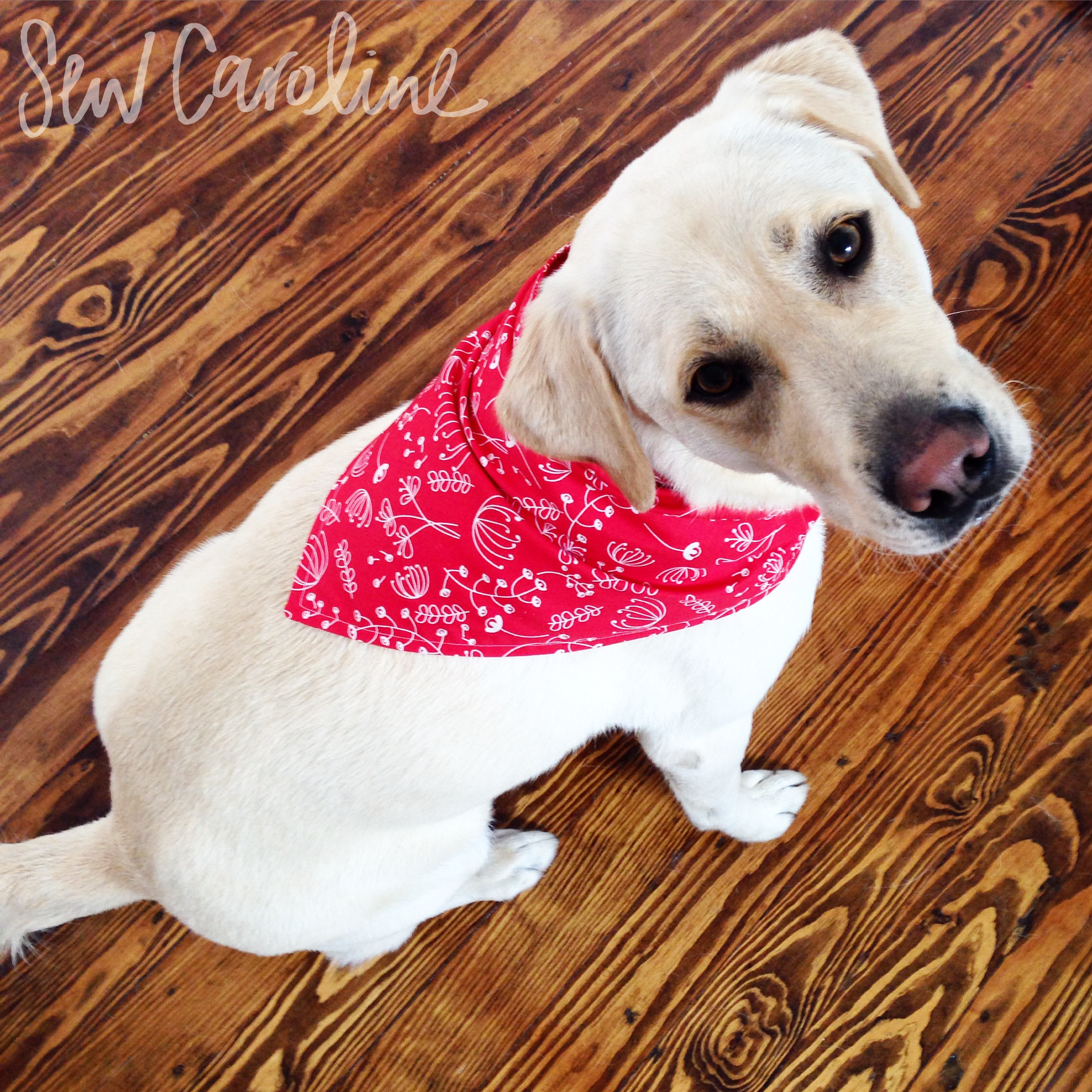 Dog Bandana - Free Pattern + Tutorial - | Sewing Patterns + ...