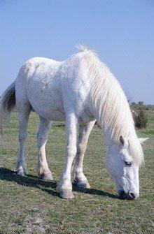 Equitation - Activités pour enfants - Dès 6 ans On commence par les poneys, du plus petit au plus grand…avant, plus tard, de monter sur un cheval. L'équitation est un sport qui développe l'équilibre, la concentration, la maîtrise de soi...