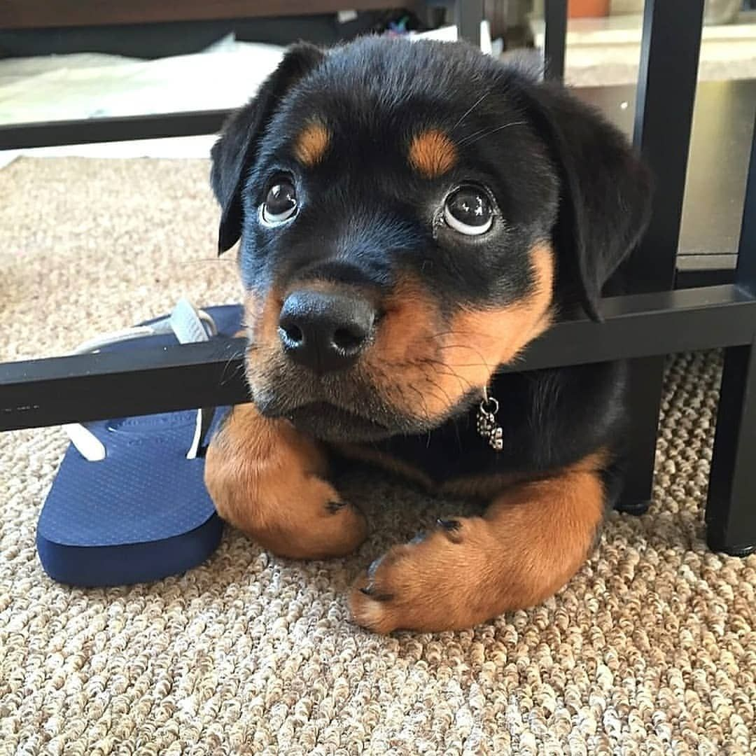 Could You Resist These Puppy Dog Eyes 9 Cute Dogs