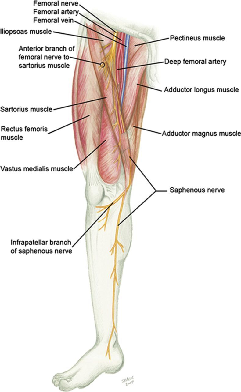 saphenous nerve block - Google Search | 08_LowerExtremity ...