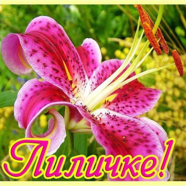 С днем рождения женщине картинка с лилиями