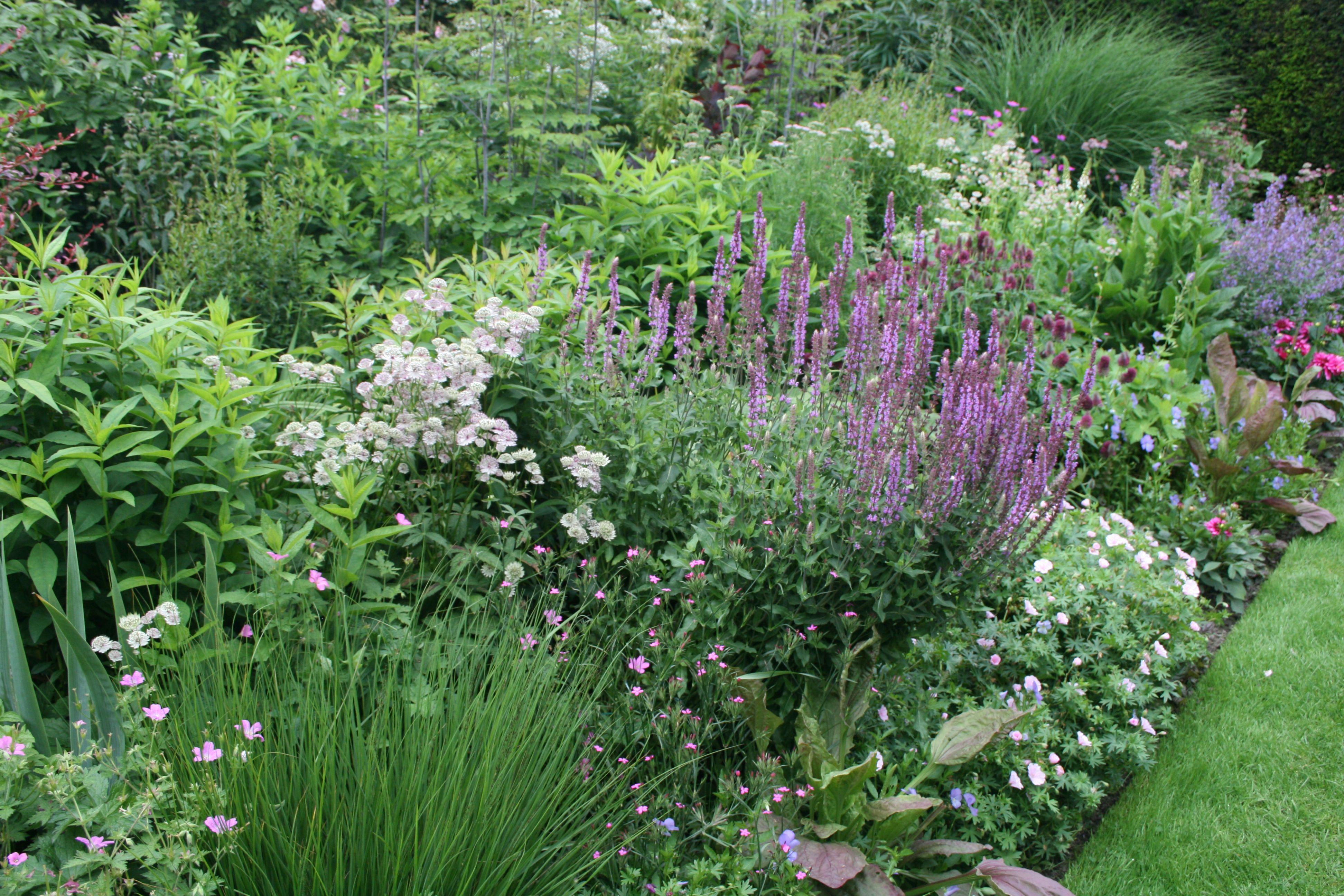 staudenbeet gartenreise belgien zonhoven garden. Black Bedroom Furniture Sets. Home Design Ideas