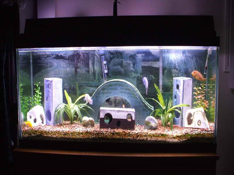 Unique Caving Aquarium Decoration Themes Home Aquarium