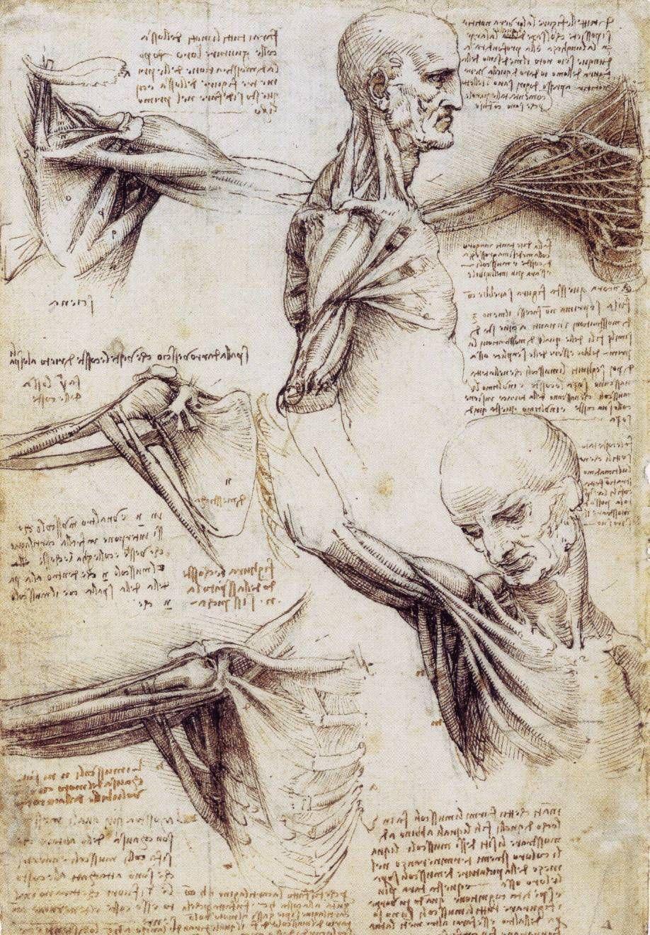 Discoveringdavinci Anatomy Sketches By Leonardo Da Vinci Leonardo