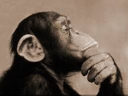 """""""التعلّم من دون تفكير جهد ضائع، والتفكير من دون تعلّم أمر خطير"""" كونفوشيوس """"Studiare senza pensare è inutile, pensare senza studiare è pericoloso""""  confucio"""