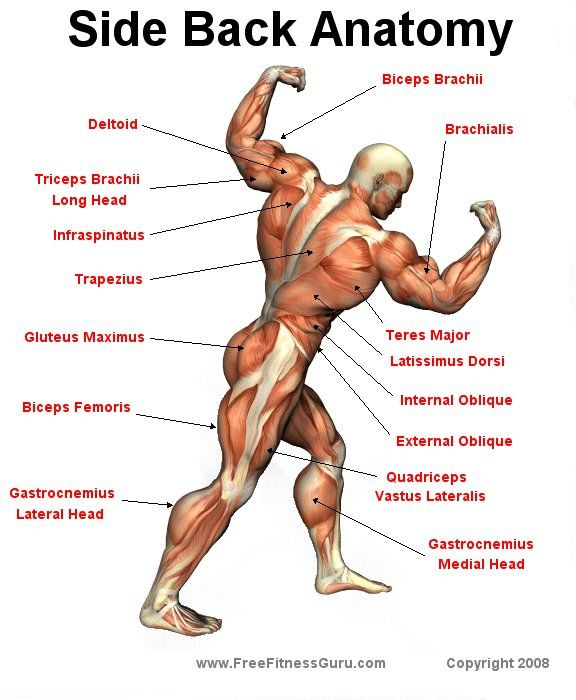 Side Back Anatomy | Personal Training | Pinterest | Anatomy, Muscles ...