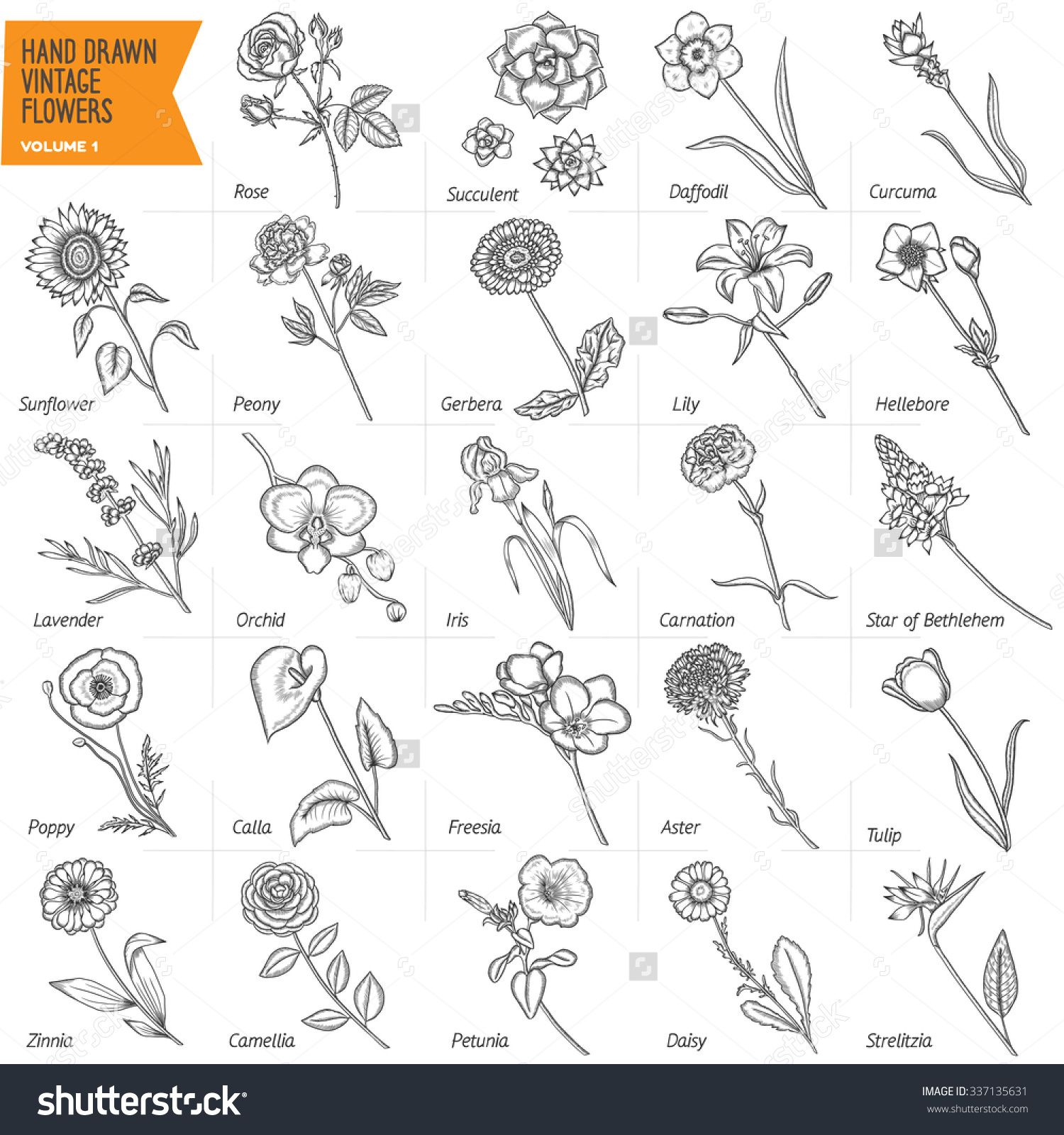 Lily Rose And Daisy Tattoos But With Color Daisy Tattoo Flower Tattoo Back Wreath Tattoo