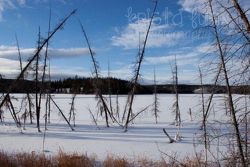 Stark Reality: A Yukon Winter Scene