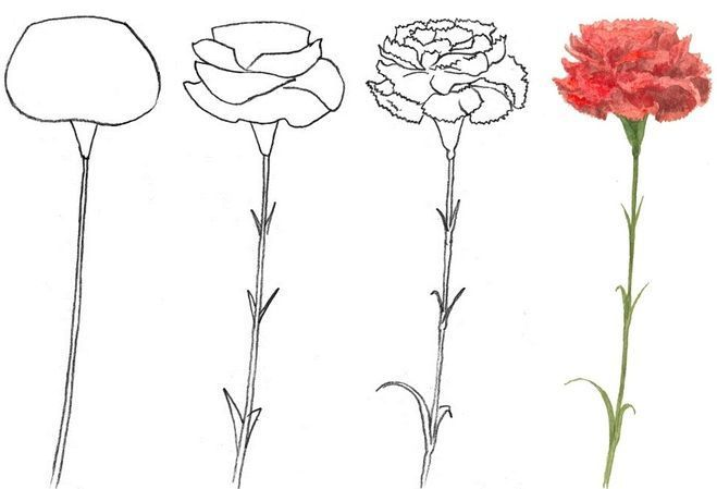 Kak Narisovat Risunok K 9 Maya Poetapno Cvetochnye Kartiny