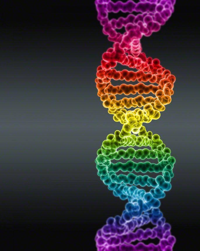 Dna Model Wallpaper: Spectrum Colored DNA By Digital Art