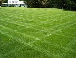 grass garden - ค้นหาด้วย Google