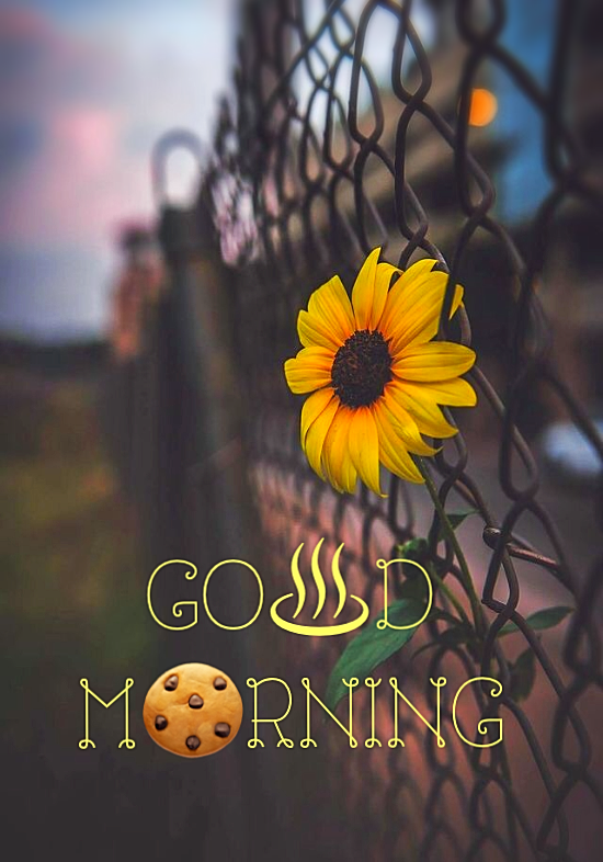 Amazing Good Morning Quotes That Will Make You Happy In 2020 Good Morning Beautiful Images Good Morning Beautiful Pictures Good Morning Quotes