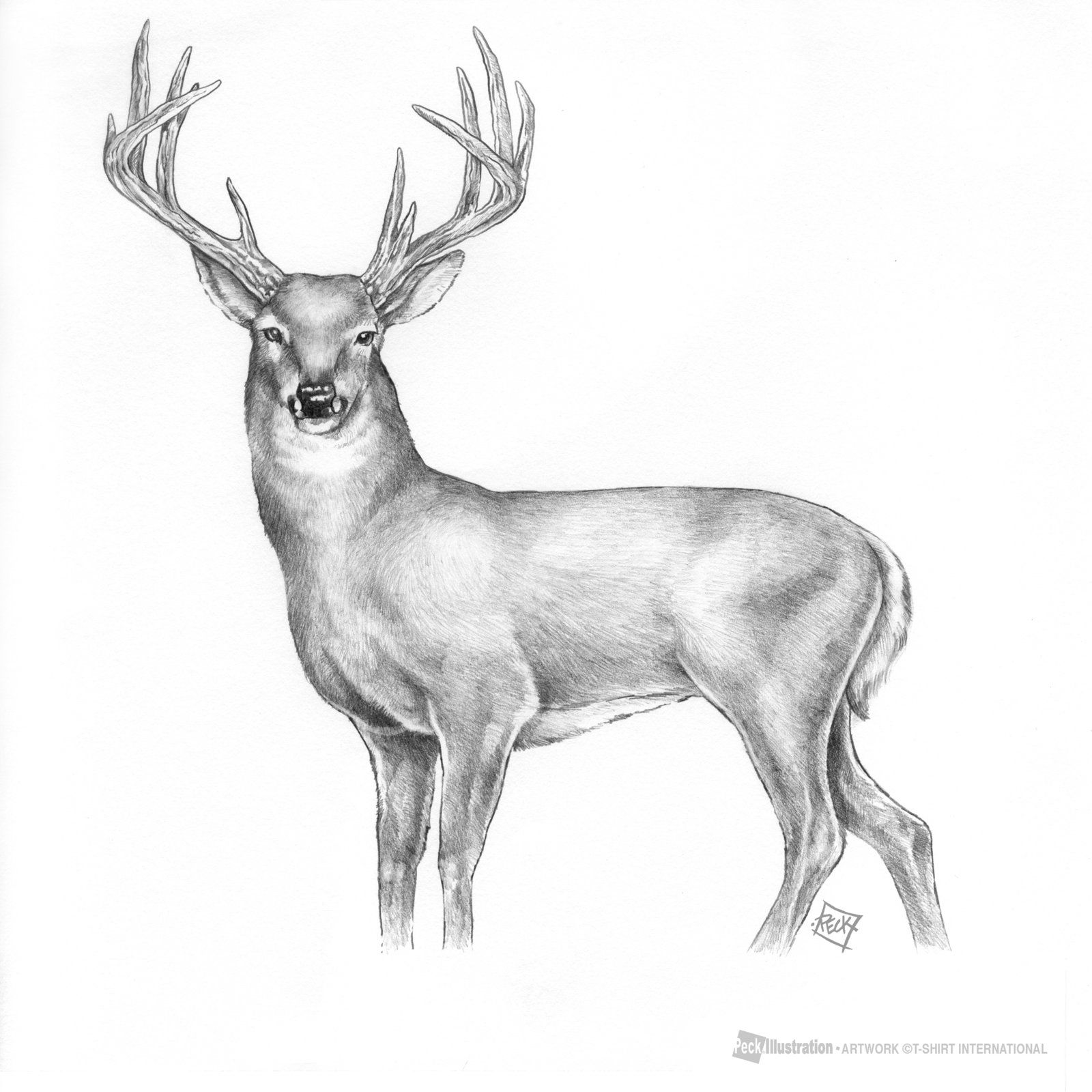 Pin By Alexis Channing On Man Cave Inspiration Easy Animal Drawings