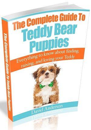 Mini Teddy Bear Puppies The World S Cutest Dogs Teddy Bear Puppies