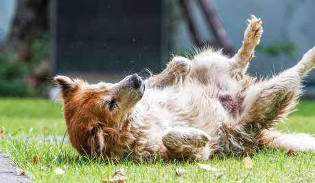 Canine Seizures Seizures, Dogs, Oils for dogs
