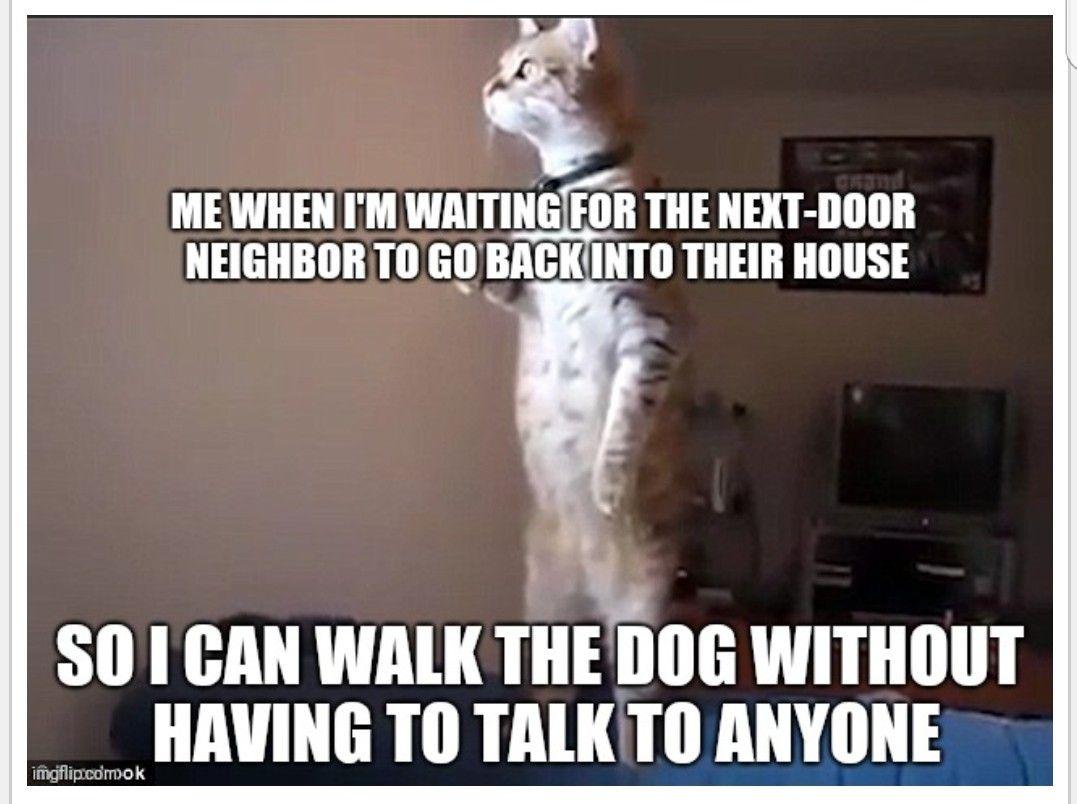 Pin By Heather Lindquist On Cat Art Memes In 2020 Dog Walking Art Memes Cat Art
