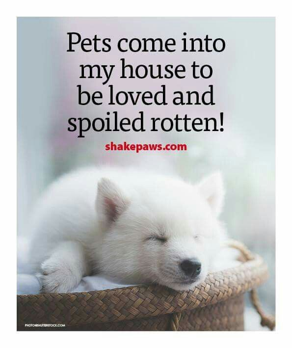So True | Animal quotes | Cute dogs, Dogs, Dog quotes funny