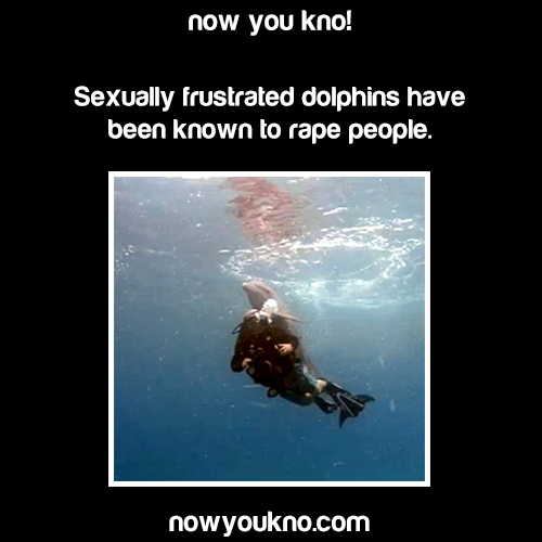 Sexually frustrated dolphins