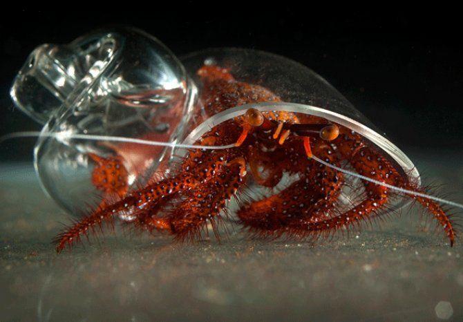 Artist and designer Robert DuGrenier makes beautiful handblown glass shells for Hermit Crabs