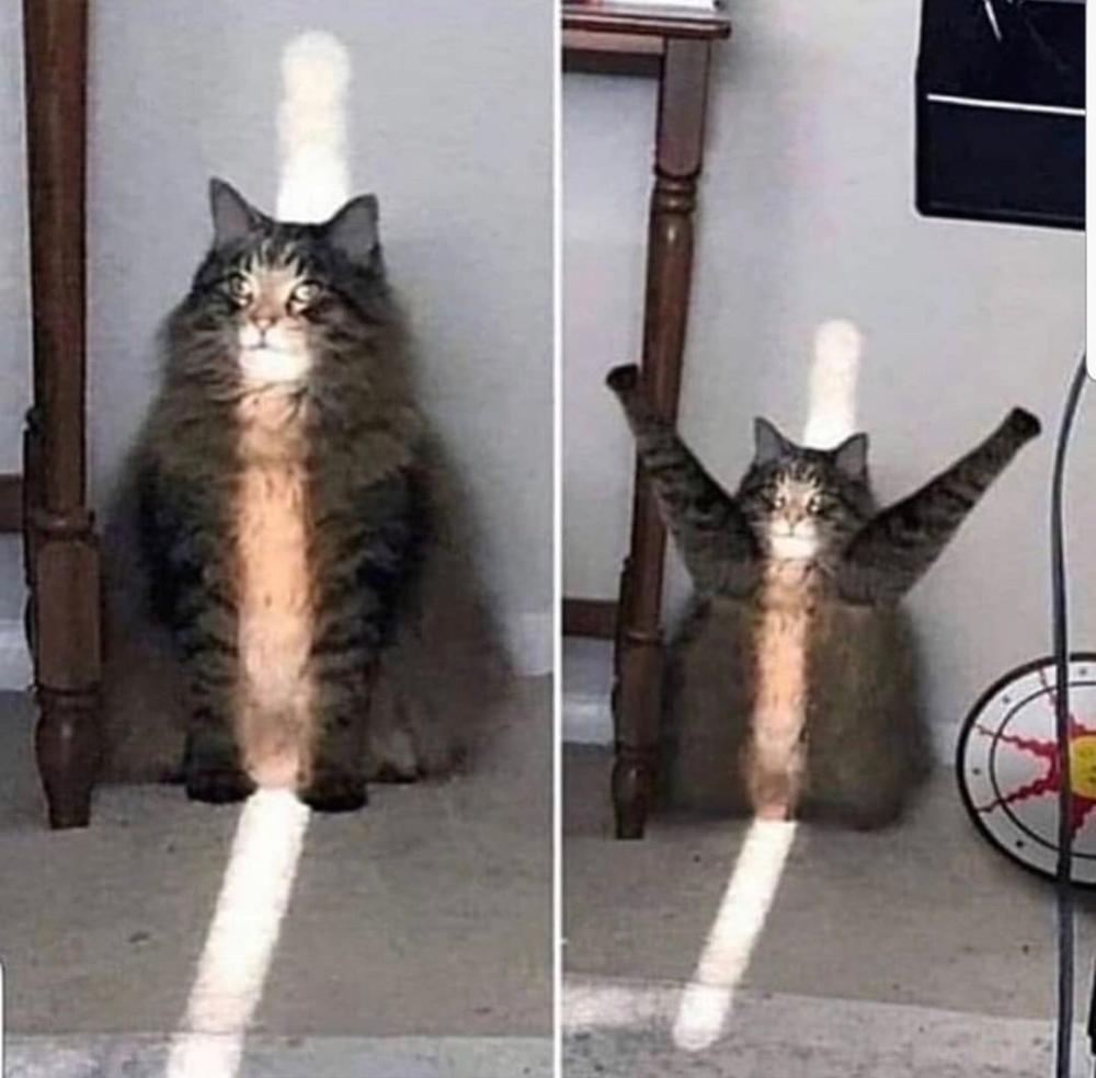 Cursed Cats