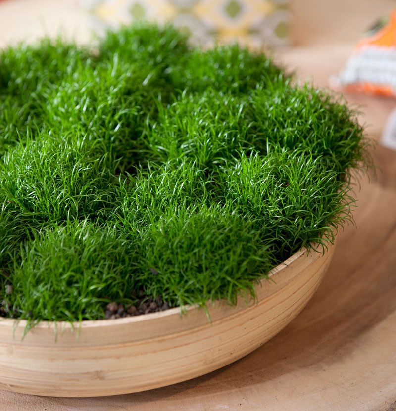 Merveilleux 11 Of The Best Plants To Have On Your Coffee Table: Moss Is Very  Drouth Tolerant (apparently)