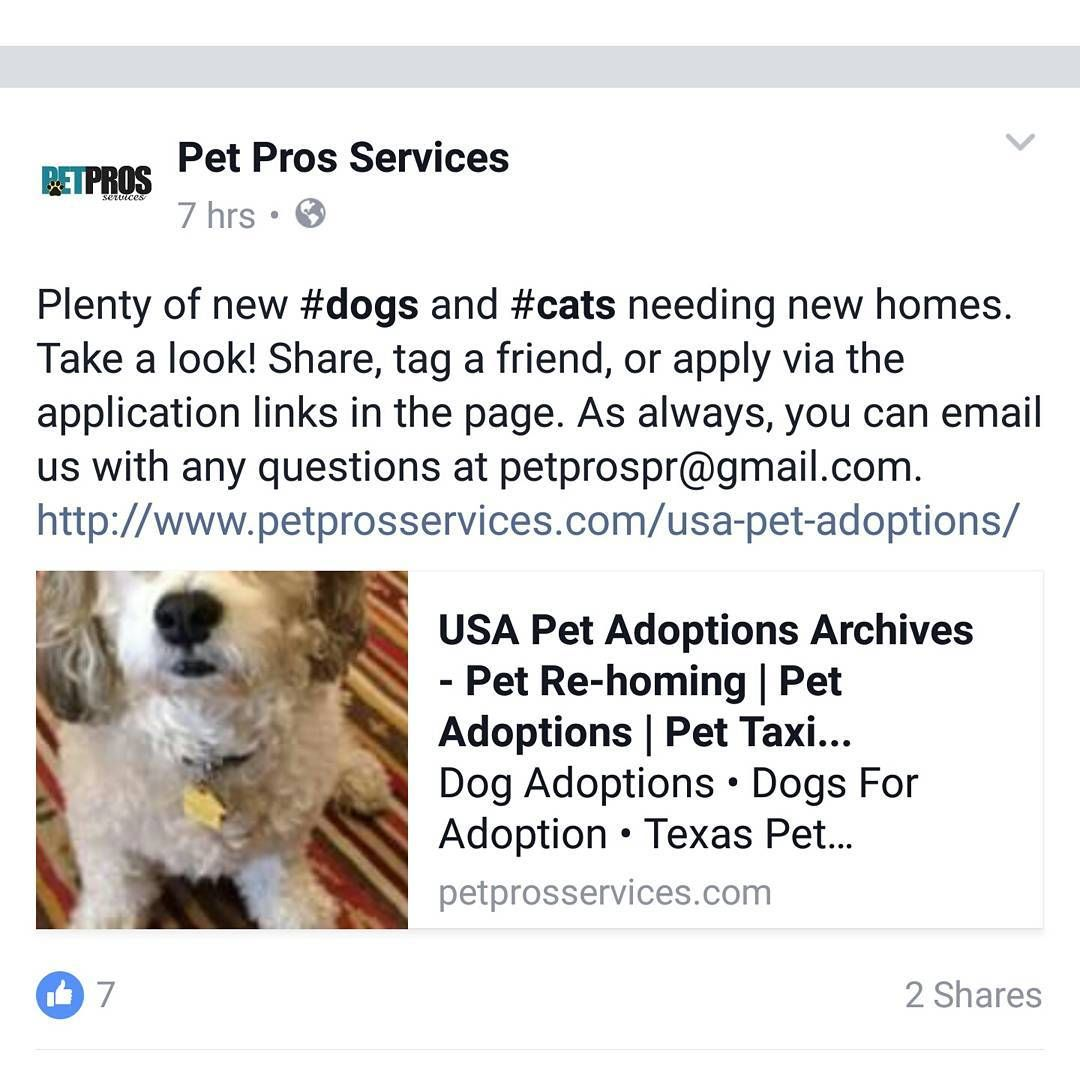 We Have New Pets Up For Adoption Pet Taxi Pets Pet Companies