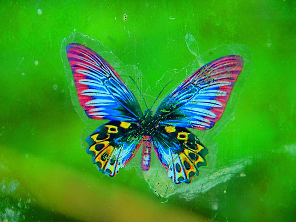 Top 10 High Quality Exotic Wallpaper of Butterflies - SA Wallpapers