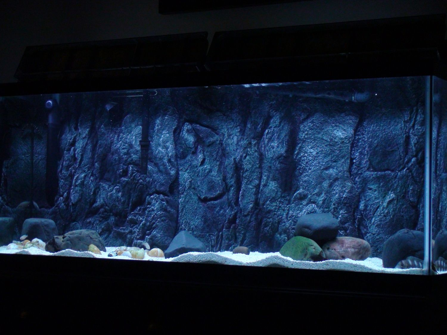 3d aquarium fish tank background feature rock - Diy 3d Aquarium Background Dsc01245 300x225 Installing A 3d Background In An Established Tank