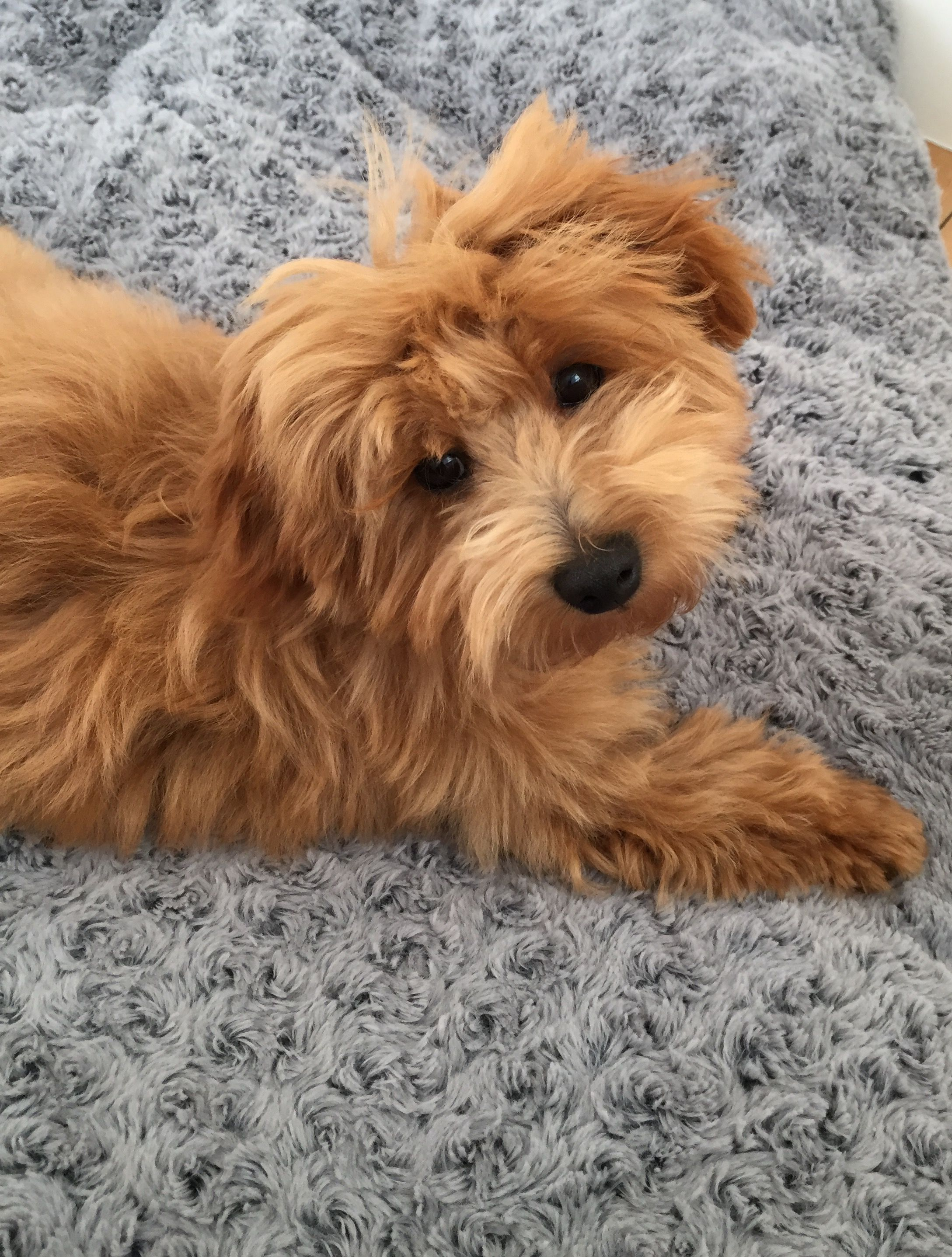Honey The Dog Puppies Dogs Writing Advice