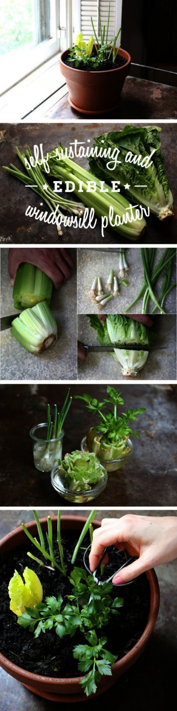 Indoor Vegetable Gardening Year Round Behind Gardening Zones
