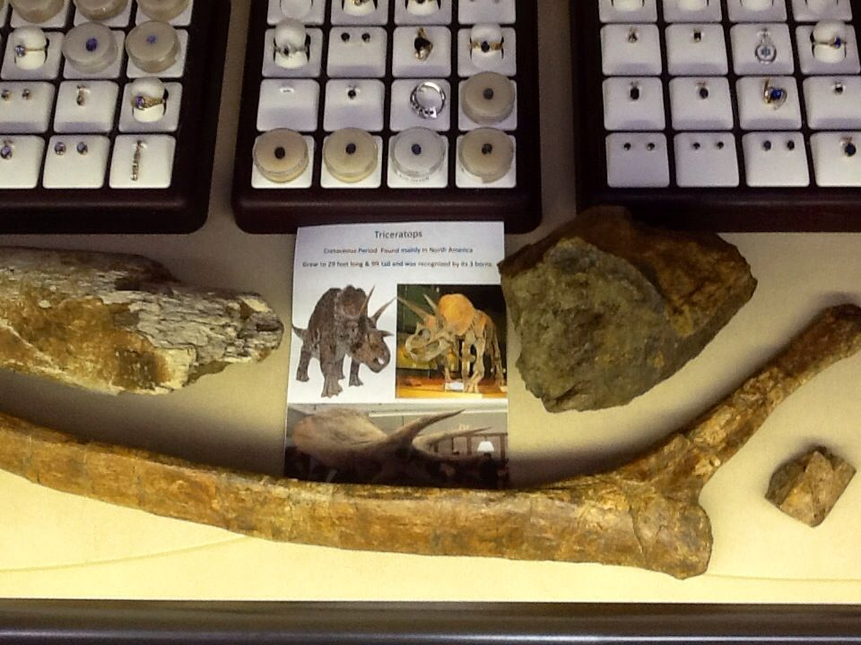 Genuine Triceratops bones at JP Gems & Jewelry in Holland, MI.  The ultimate item to add to your dinosaur fossil collections.