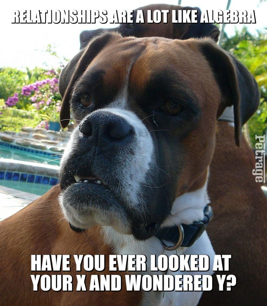 Sparks The Sarcastic Boxer Dog Boxer Dogs Funny Funny Boxer Boxer Dogs
