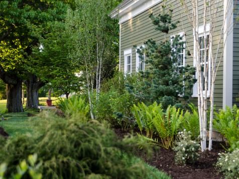 Landscape beds planted nearest the home's foundation feature Interrupted ferns, Himalayan birches, highbush blueberry bushes and Japanese white pine.