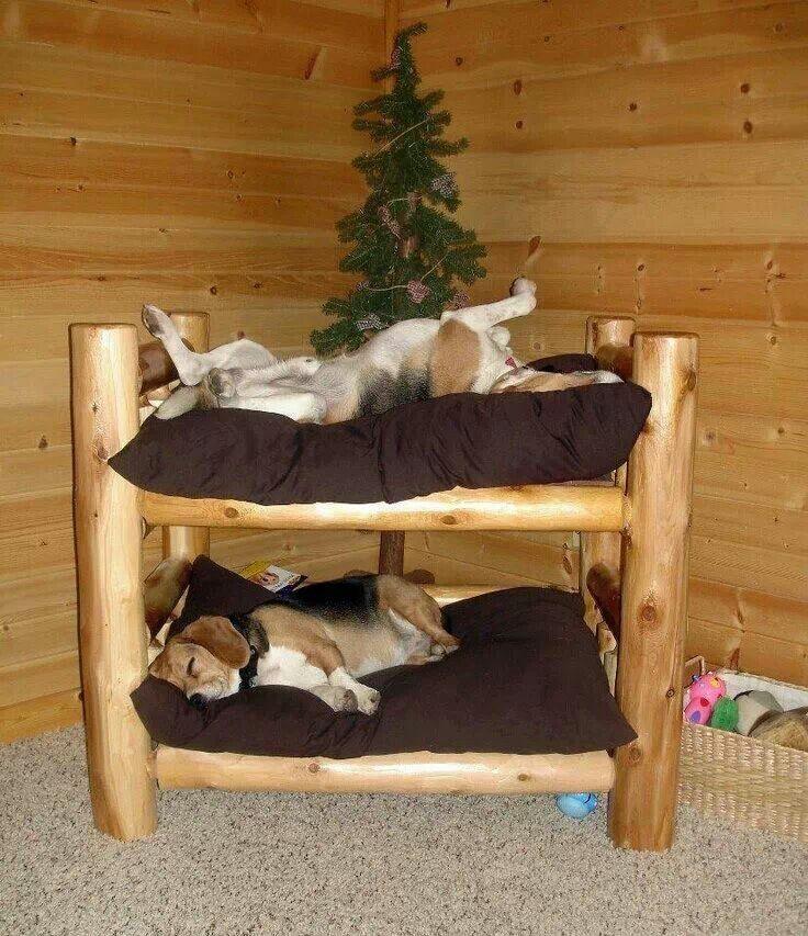 Bunk Beds Dog Bunk Beds Diy Dog Bed Dog Furniture