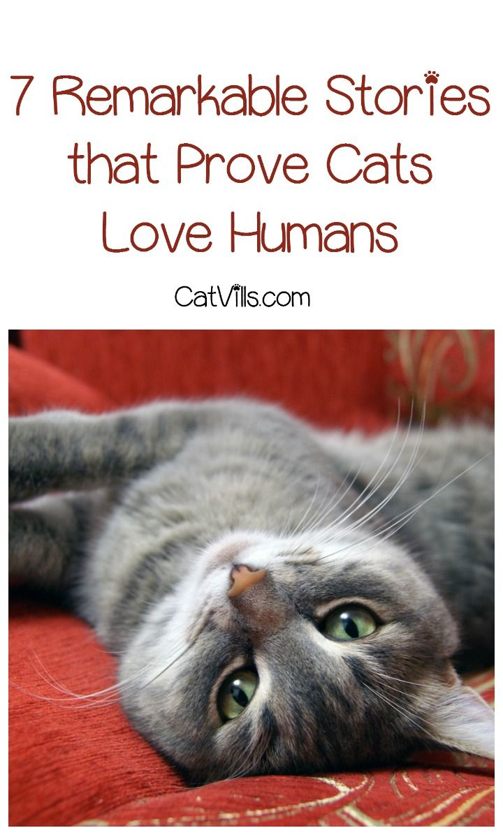 7 Incredible Stories That Prove Cats Love Humans Catvills Cat Love Cat Facts Cat Care