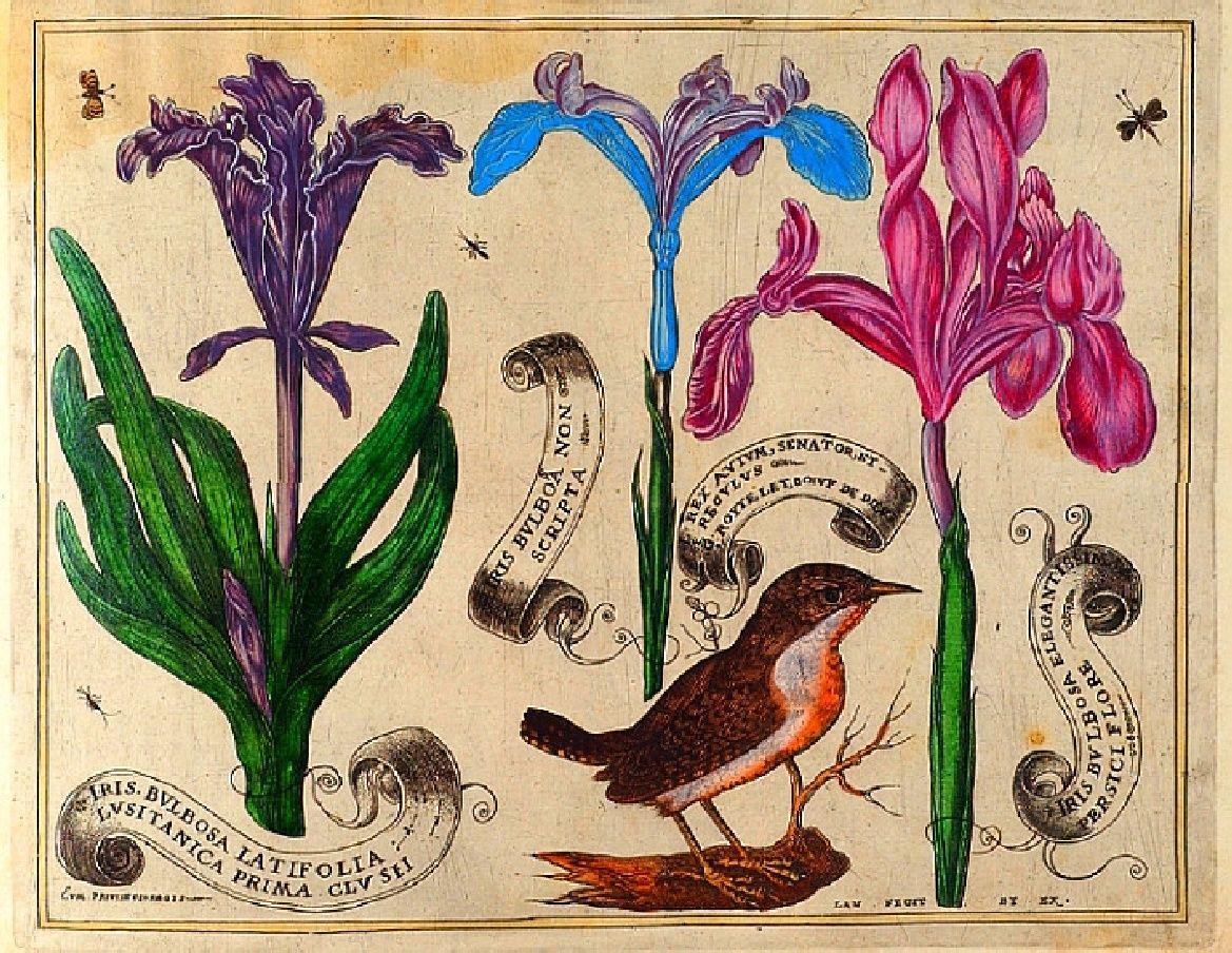 Vintage Printable E Book Pdf Livres De Fleurs 1620 Birds And Flowers Botanical Drawings Botanical Illustration Botanical Art