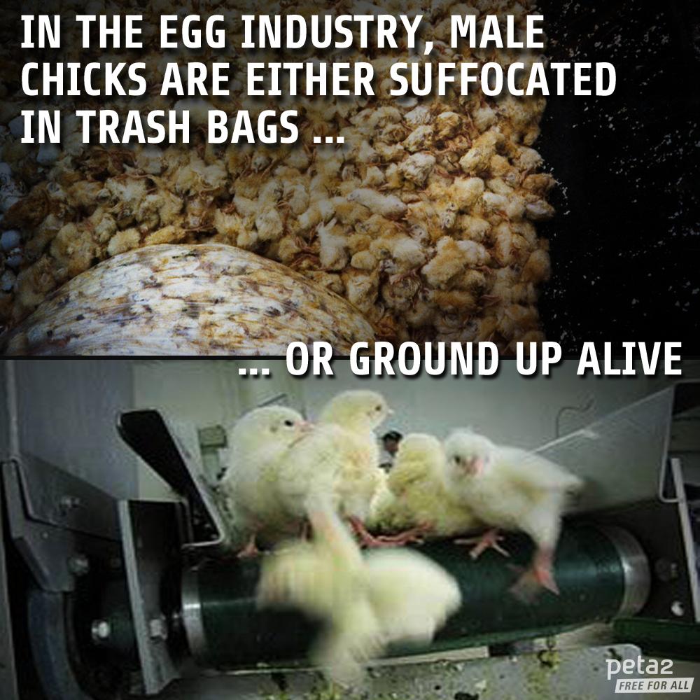 please don't finance this cruelty; #vegan