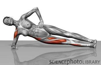 Side Plank Anatomy