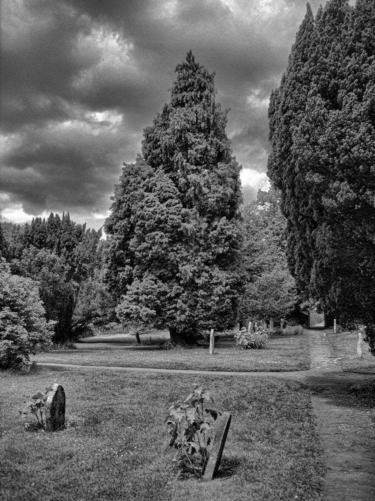 The Tree by SimonHill