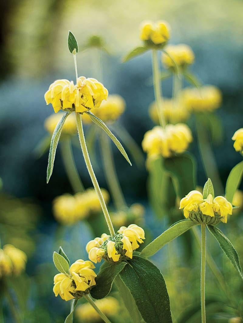 15 Favorite Perennial Flowers Drought Tolerant Landscape