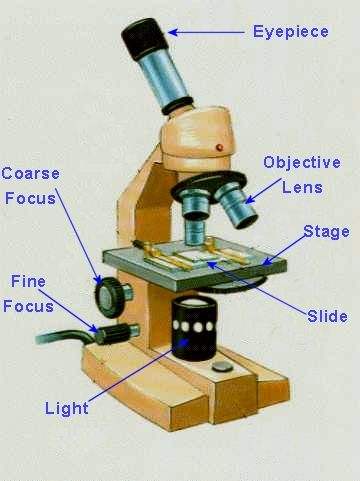 Binocular Compound Microscope Diagram Wiring For Mtd Ignition Switch Labelled Of A Optics Binoculars Equipment