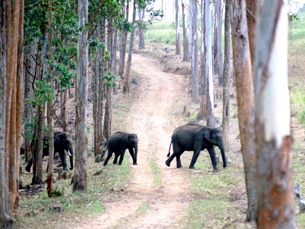 Trekking in the Chinnar Wildlife Sanctuary, Thoovanam