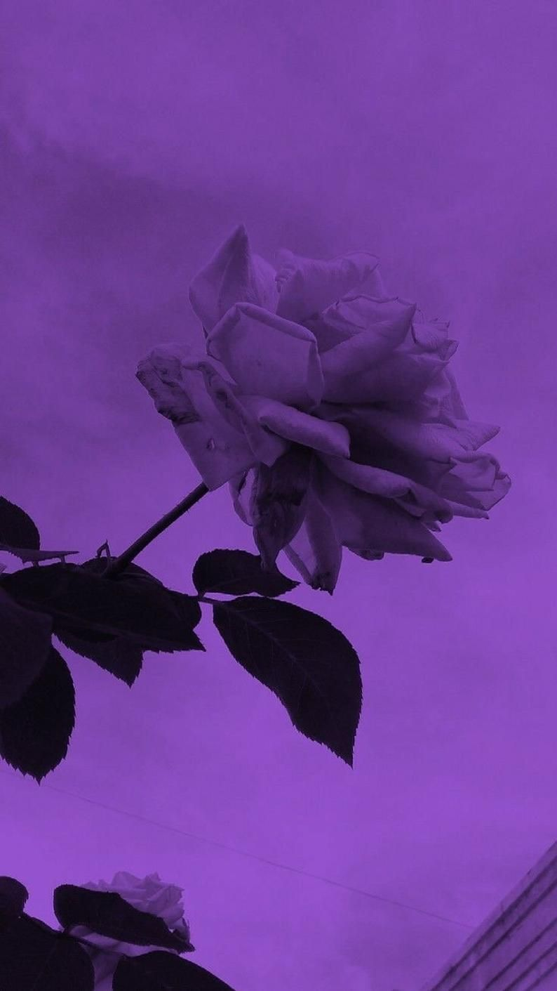 Purple Aesthetic Photo Collage Kit