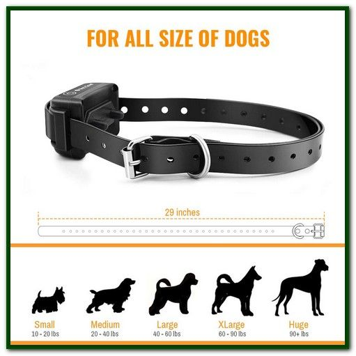 Best Remote Shock Collar For Small Dogs Searching To Buy The
