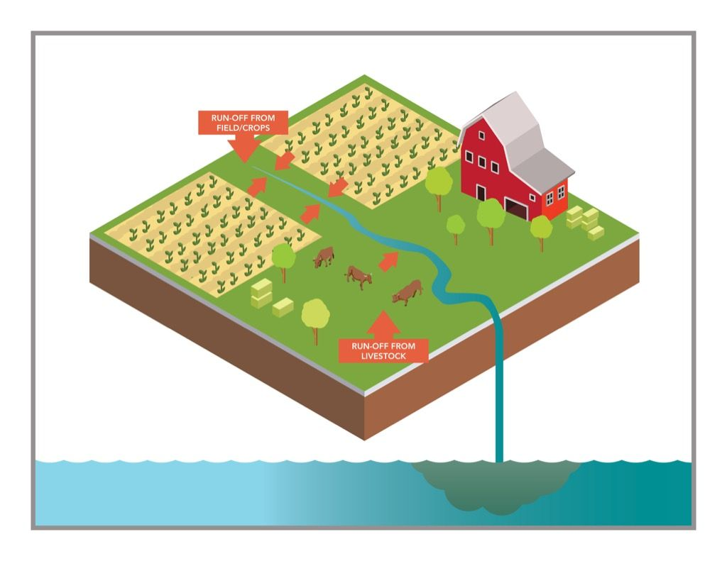 Illustration Showing Non Point Source Pollution