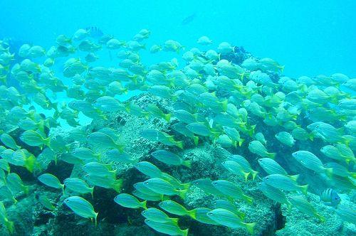 Scuba diving in Hawaii