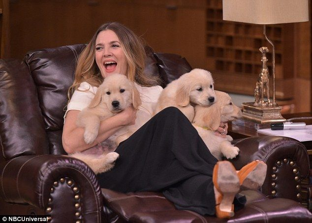 Feel the love: Drew cuddled up to three furry puppies while on the show