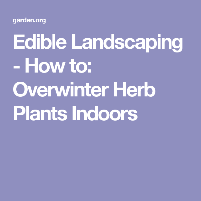 Edible Landscaping - How to: Overwinter Herb Plants Indoors