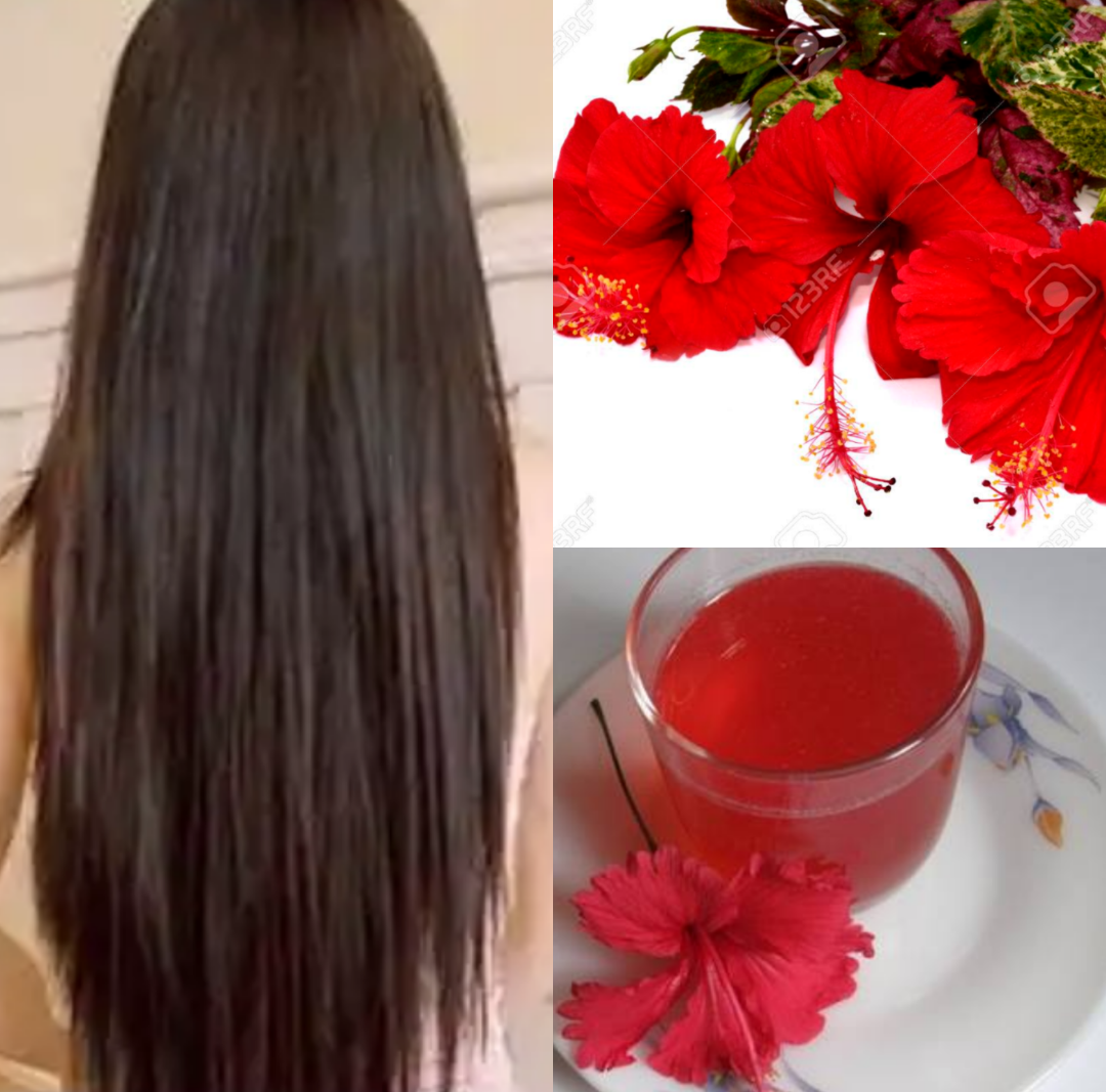 Hibiscus Flower Hair Oil Flowers In Hair Hair Oil Hair Growth Faster