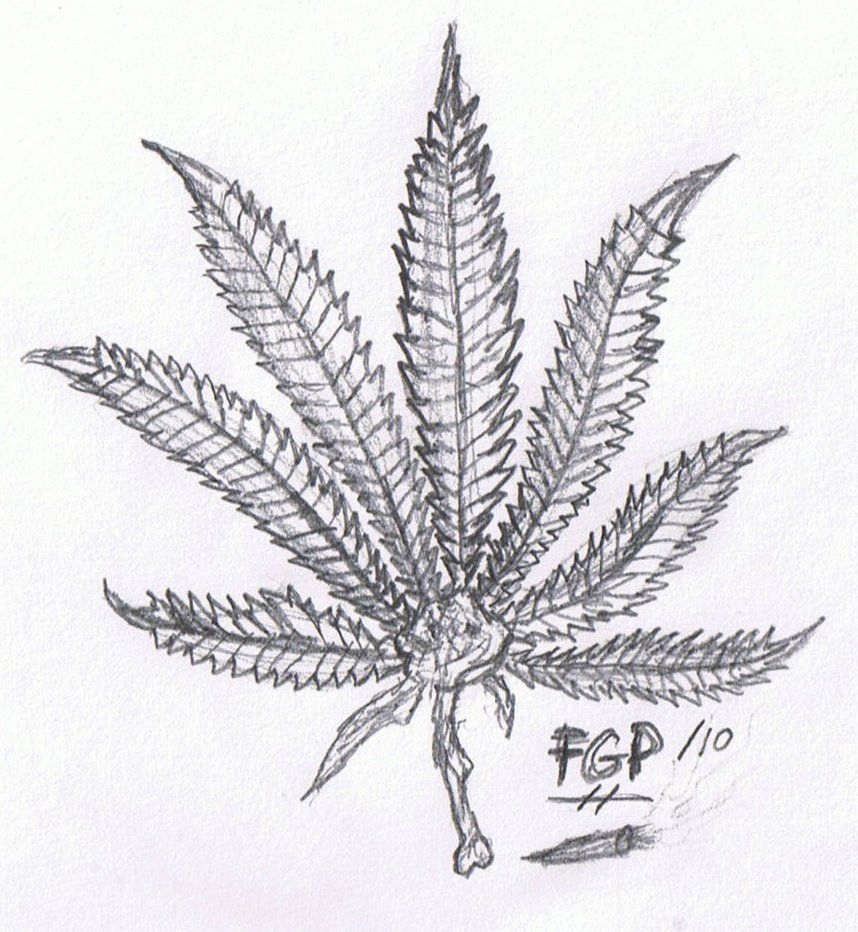 Marijuana Leaf Sketch by FROZEN-GREEN-PEACE on deviantART ...